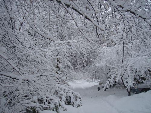 SNOWFEB2010 034