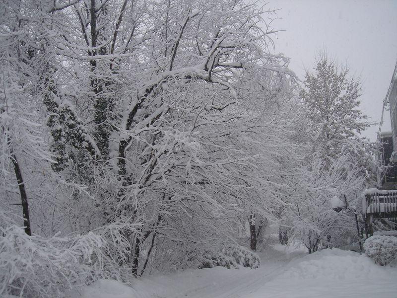 SNOWFEB2010 030